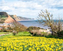 Sidmouth valley of a thousand bulbs