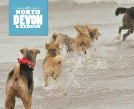best dog holidays in north devon