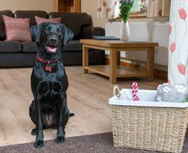dog friendly holidays cofton