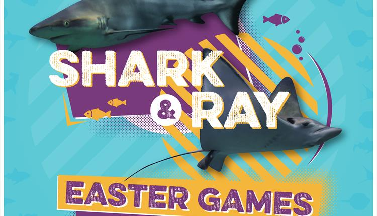 Shark and Ray Easter Games
