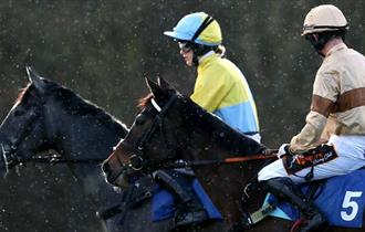 Come racing at Exeter this Christmas