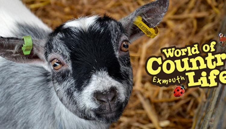 February Half Term Fun at World of Country Life, Exmouth