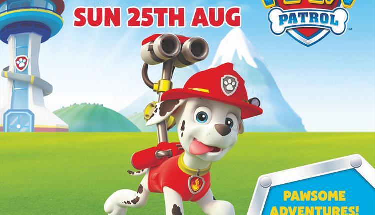 See Marshall from PAW Patrol