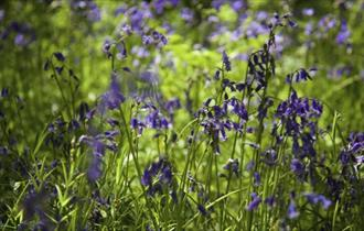 Bluebell Woodland Walk with Lunch at Gidleigh Park