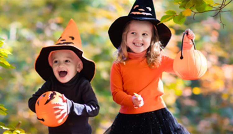 Halloween Half Term at World of Country Life, Exmouth!