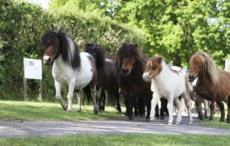 The Miniature Pony Centre