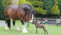 Miniature Pony Centre