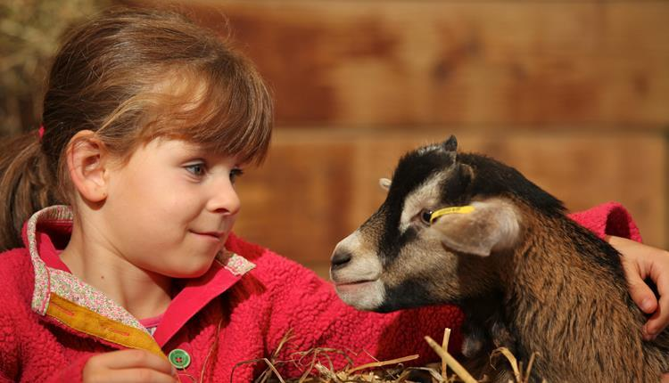 February Half Term at World Of Country Life
